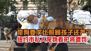 纽约市私人宠物看护将遭罚 民众:若全面取缔有违市场需求