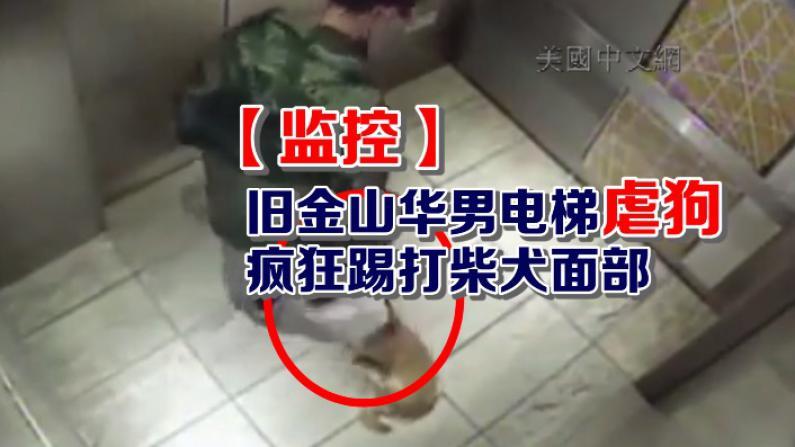 【监控】旧金山华男电梯虐狗 疯狂踢打柴犬头部