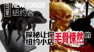 HELLO纽约客:将大自然搬运到曼哈顿的创二代