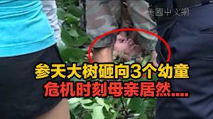 参天大树砸向3个幼童   危机时刻母亲居然....