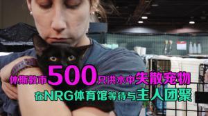 休斯敦市500只洪水中失散宠物 在NRG体育馆等待与主人团聚