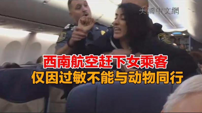 西南航空赶下女乘客  仅因过敏不能与动物同行