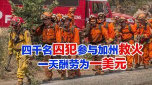四千名囚犯参与加州救火 一天酬劳为一美元