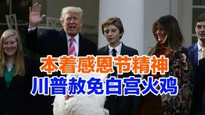 本着感恩节精神 川普赦免白宫火鸡
