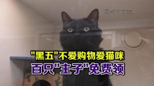 """黑色星期五不爱购物爱猫咪 """"周五助猫日""""百只"""