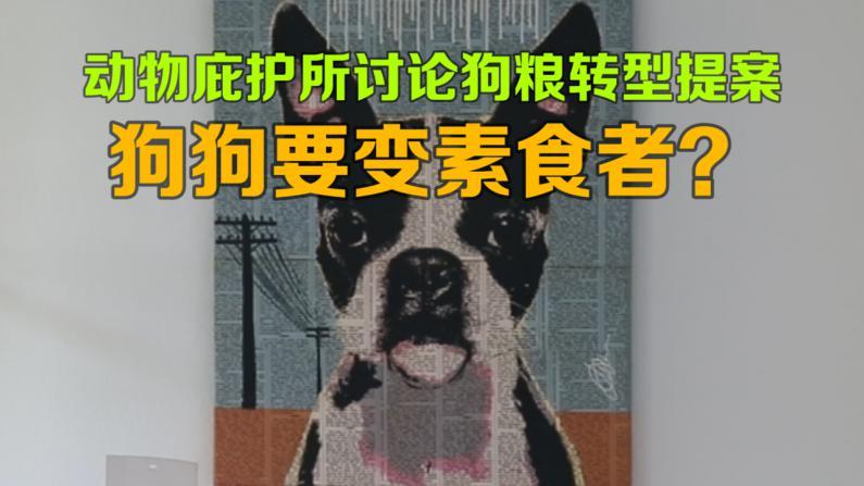 狗粮配料转型? 洛城动物庇护所有望将狗变素食者