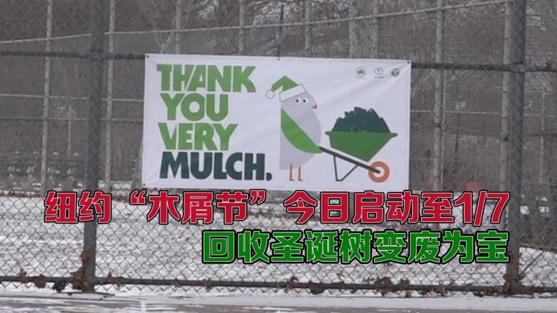 """纽约""""木屑节""""今日启动至1/7 回收圣诞树变废为宝"""