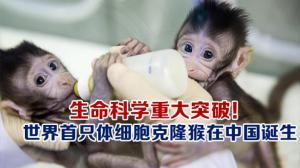 生命科学重大突破! 世界首只体细胞克隆猴在中国诞生