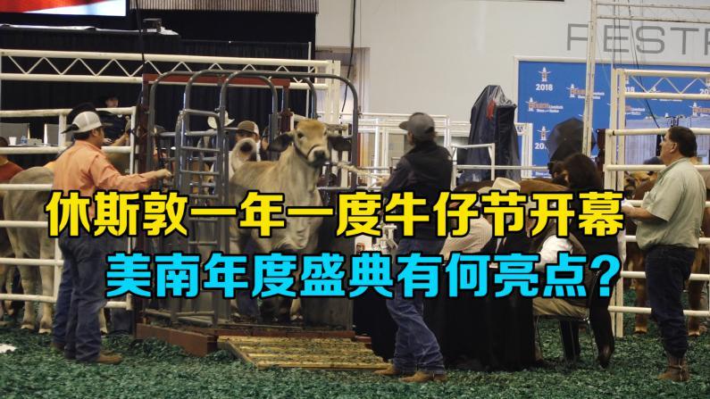休斯敦一年一度牛仔节开幕 首日农业畜牧展吸睛