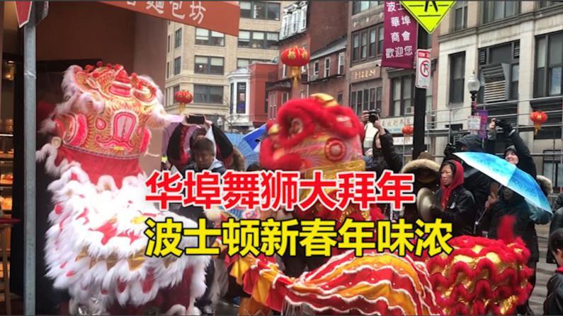 华埠舞狮大拜年 波士顿新春年味浓