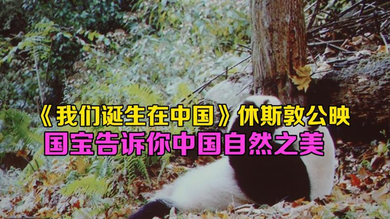 纪录片《我们诞生在中国》休斯敦协会公映 展示中国自然之美