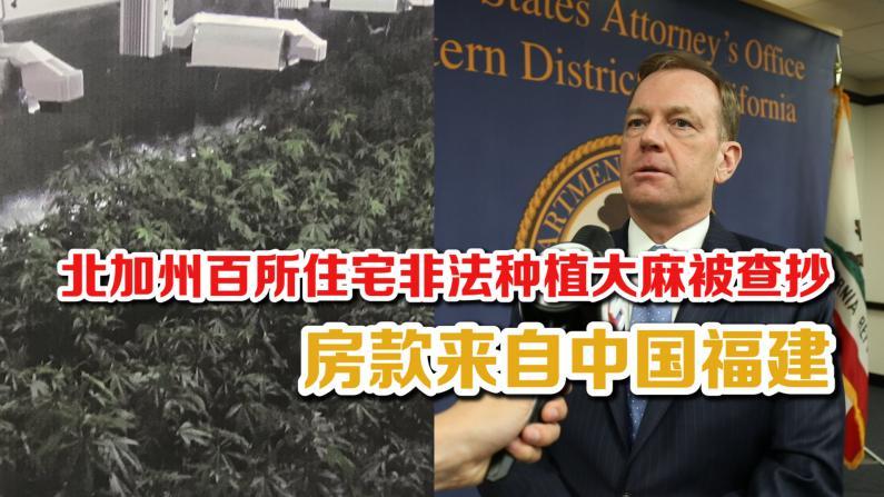 北加州百所住宅非法种植大麻被查抄 幕后操盘手为中国犯罪团伙