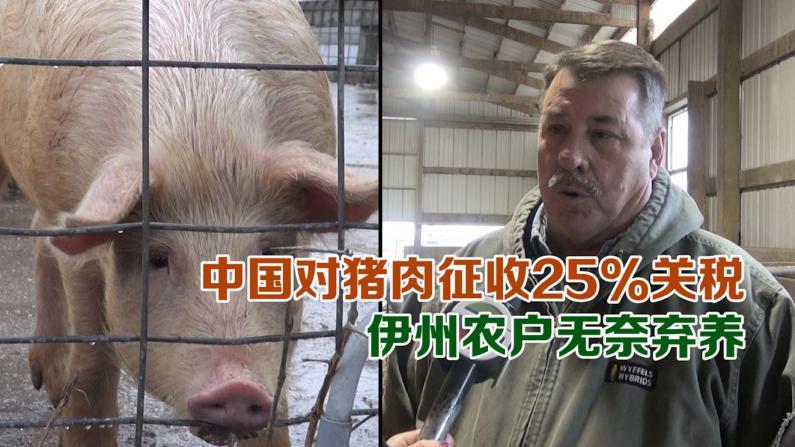 中国对猪肉征收25%关税 伊州农户无奈弃养