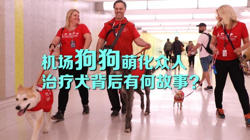 狗狗成群现身洛杉矶机场 治疗犬背后有何故事