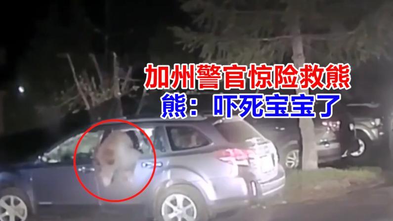 加州警官惊险救熊 熊:吓死宝宝了
