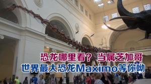 """世界最大恐龙Maximo""""现身""""芝加哥 长112英尺 重70吨"""