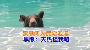 黑熊闯入民宅泡澡 黑熊:天热怪我咯