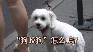 """""""狗咬狗""""怎么赔? 小额法庭给答案"""