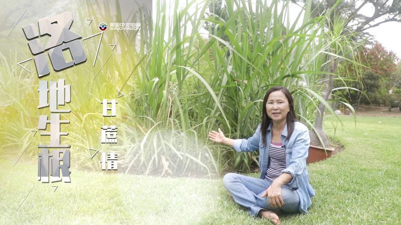 自带甜度的中国文化 一对甘蔗母子的故事