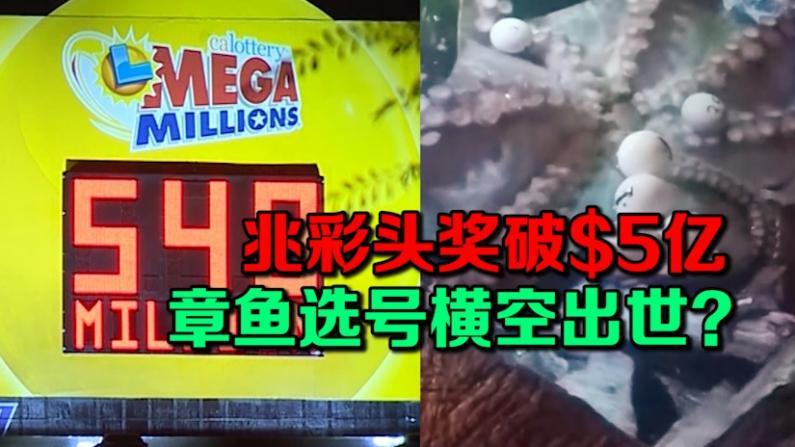 兆彩头奖破$5亿 章鱼选号横空出世?