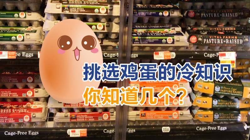 挑选鸡蛋的冷知识你知道几个?
