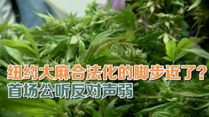 纽约大麻合法化的脚步近了?首场公听反对声弱