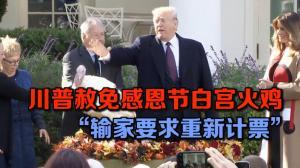 """川普赦免感恩节白宫火鸡  """"输家要求重新计票"""""""