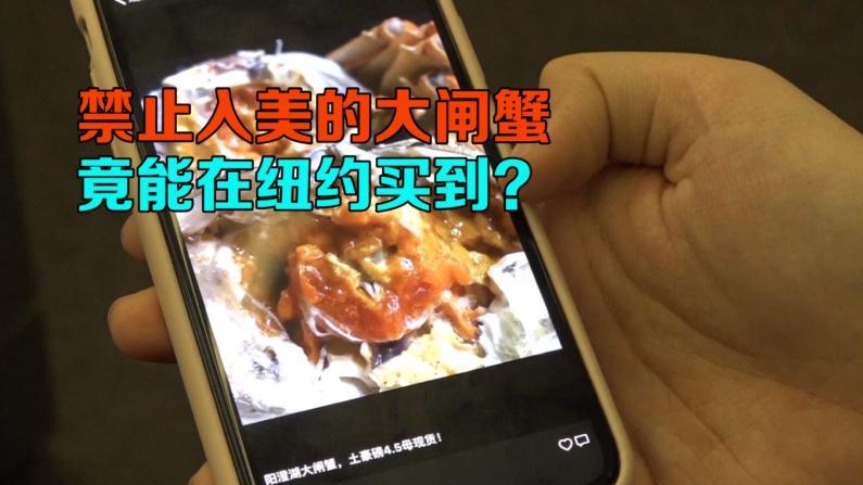 美国海关严打的大闸蟹 竟能在纽约法拉盛买到?