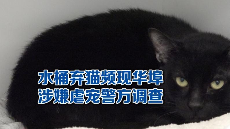 纽约华埠频现弃猫 涉嫌虐宠警方立案
