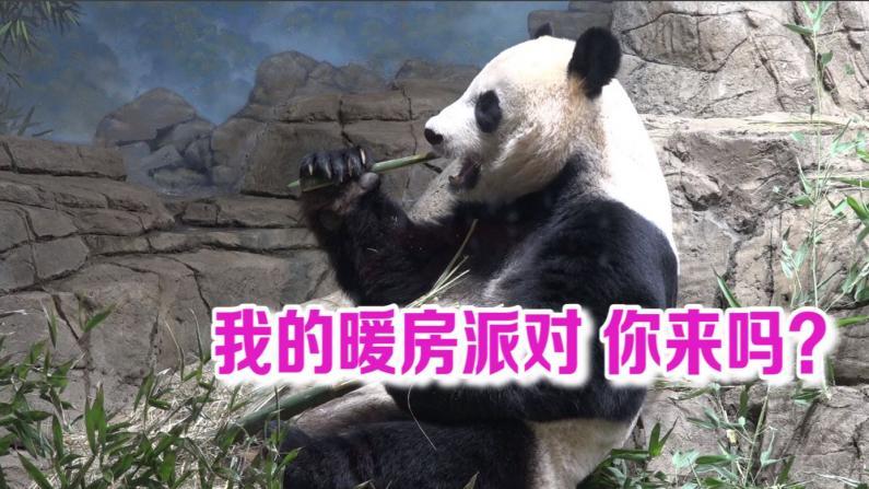 大熊猫的暖房派对 邀请你来参加!