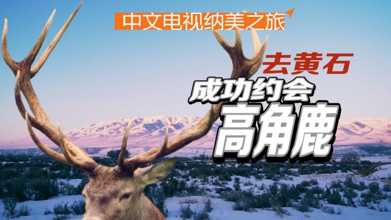 黄石之行:高角鹿的冬宫圣地