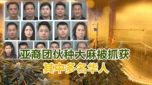 亚裔团伙种大麻被抓获 其中多名华人