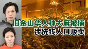 旧金山华人种大麻被捕 涉洗钱人口贩卖