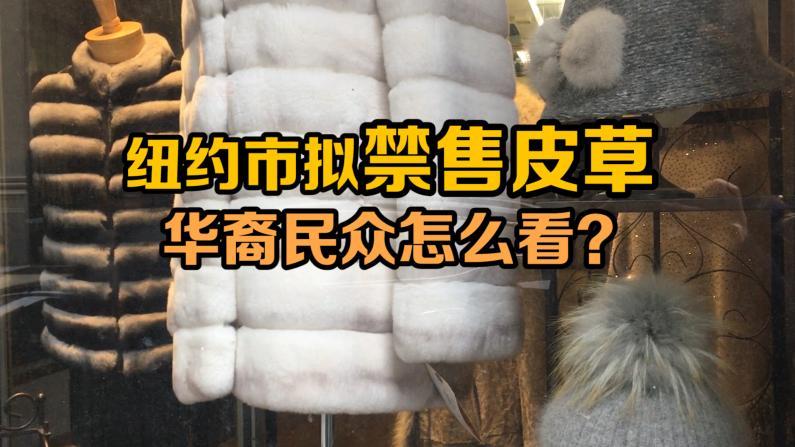 纽约市拟禁售皮草 华裔民众怎么看?
