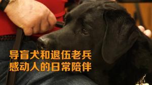 导盲犬和退伍老兵 感动人的日常陪伴