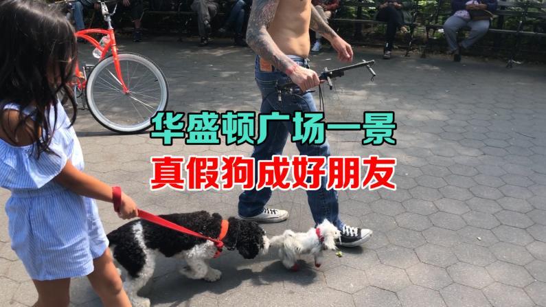 华盛顿广场一景 真假狗成好朋友