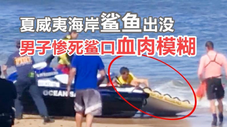 夏威夷海岸鲨鱼再次出没 男子惨死鲨口血肉模糊