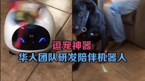 逗宠神器 华人团队研发宠物陪伴机器人
