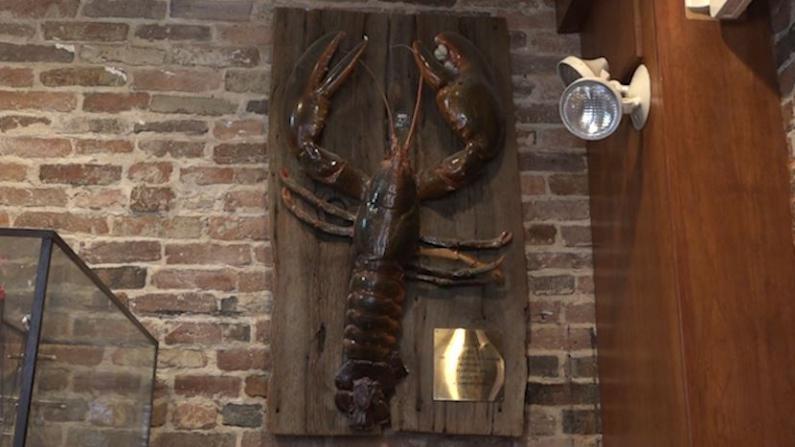 史上最大龙虾!开眼了!