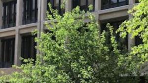 麻省理工的这颗苹果树太牛了!