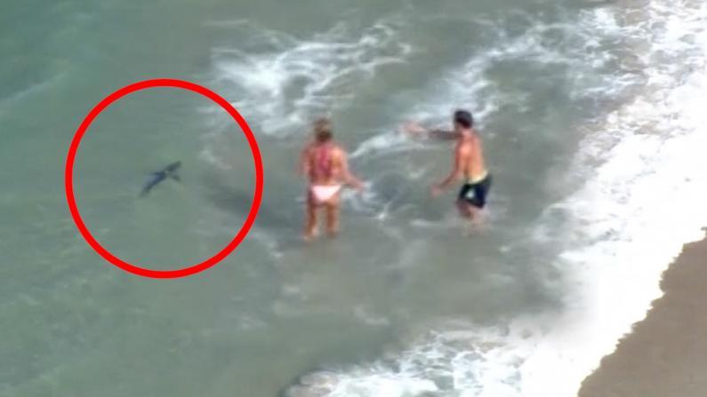太惊险了! 佛州鲨鱼在游客身边游泳