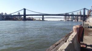 纽约环境保护局急寻大闸蟹 你看到过吗?