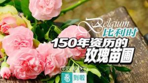 比利时:十万株八百种,玫瑰迷梦