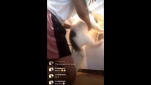 惹众怒!德州女子直播把狗放进烘干机