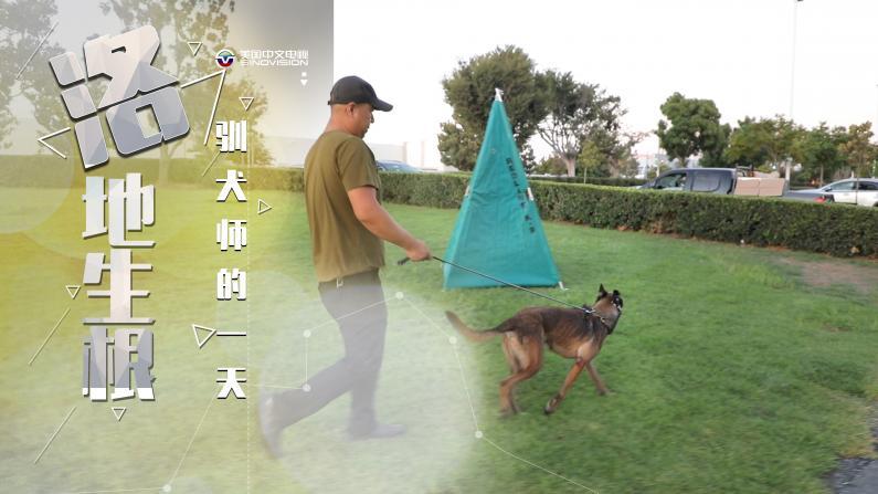 """【洛地生根】狗狗的心思他都懂!驯犬师和他的""""汪星人""""们"""