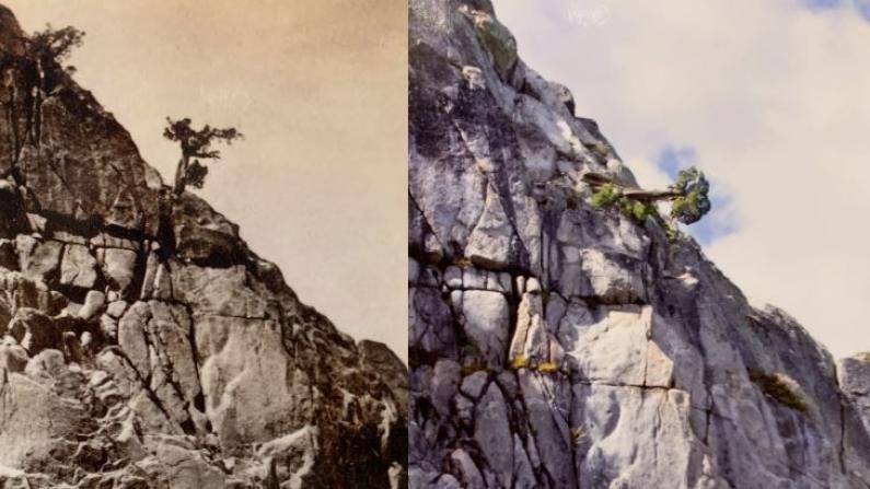 百年老树奇迹见证铁路华工足迹