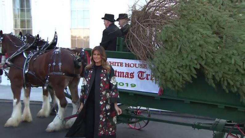 圣诞树就位,火鸡也来了,白宫进入节日季