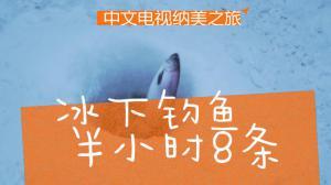 天寒地冻,凿冰钓鱼,半小时八条? | 精彩再看
