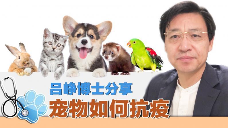 【乐活抗疫】宠物会感染新冠病毒吗?解答宠物防疫知识