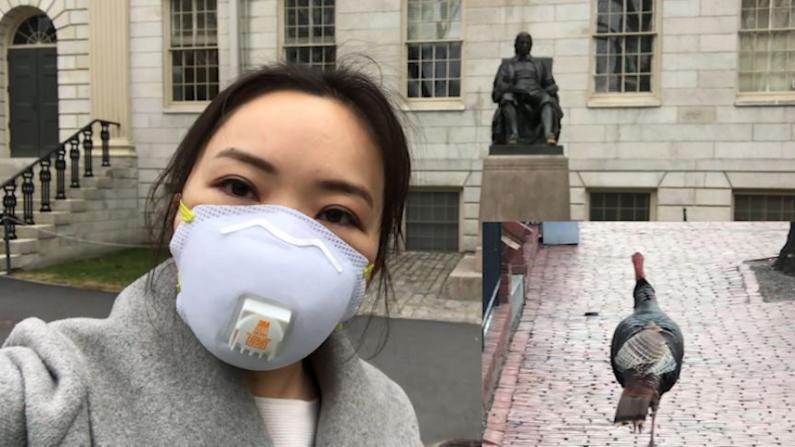 【实拍】火鸡街头散步 疫情下的哈佛大学孤独寂寞冷